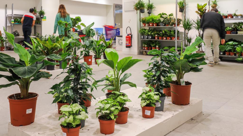 le gout des plantes boutique éphémère